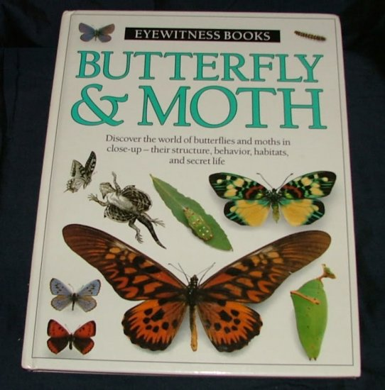 Image for Butterfly & Moth